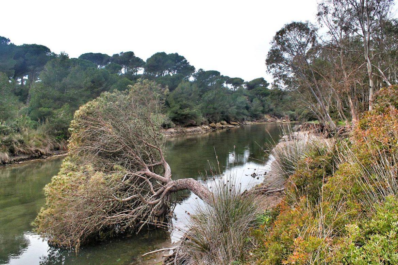 Ruta del Río Roche