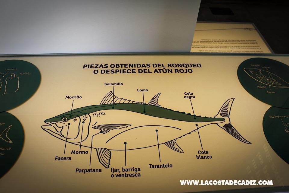 Centro de Interpretación del mar, las almadrabas y el atún de Conil
