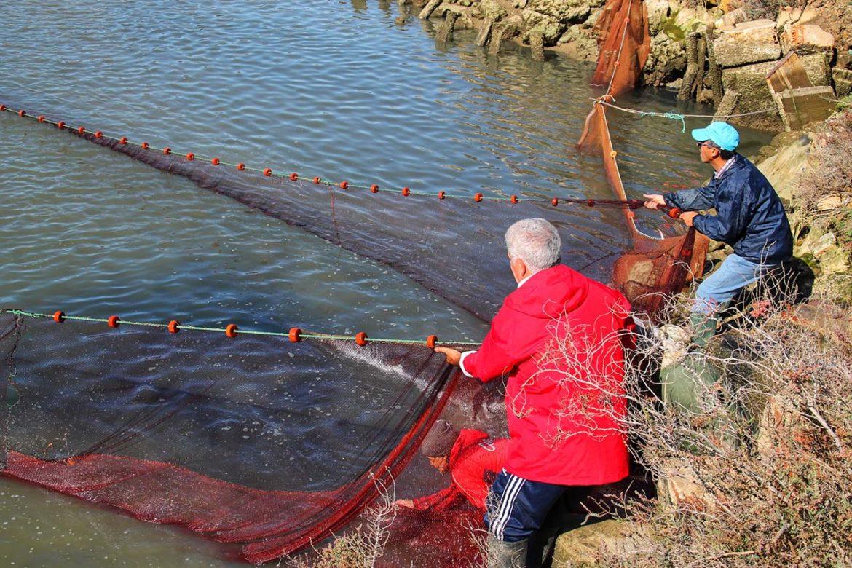Pescado y marisco de Estero